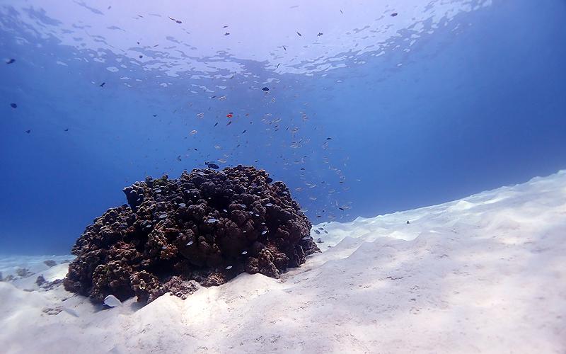 ラチャノイ&ヤイ島 青い海、白い砂、綺麗な珊瑚礁