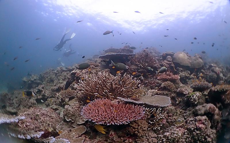 スリン諸島 浅瀬に広がる珊瑚礁