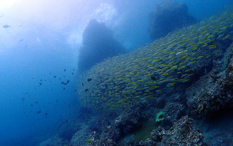 ピピ島 ビダノックの水中風景