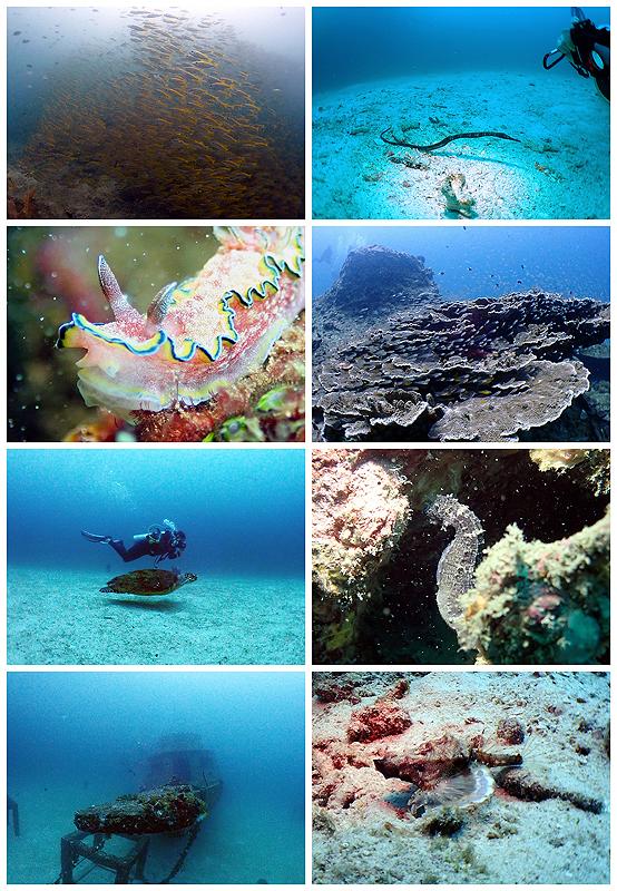 タイ プーケット ファンダイビング 海ブログ