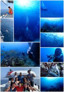 タイ プーケット ダイブクルーズ 海ブログ